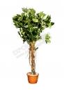 Растение 110 см.