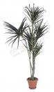Пальма 180 см.